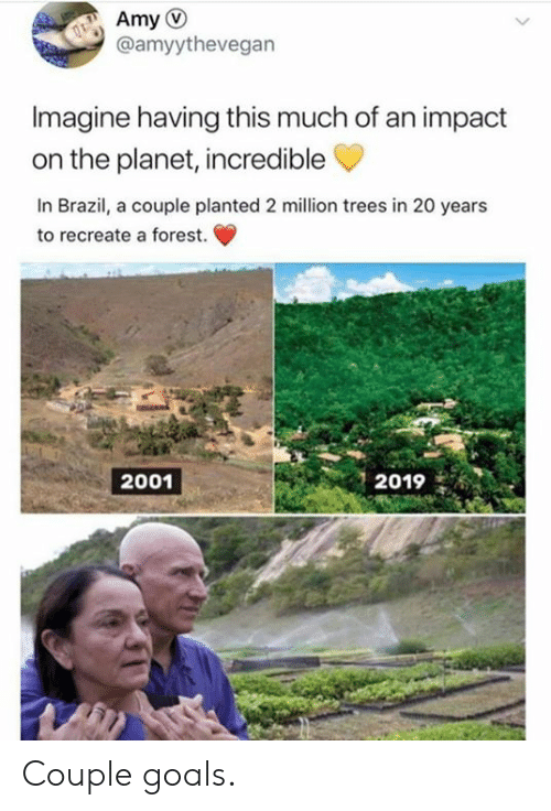 Recreate: @amyythevegan  Imagine having this much of an impact  on the planet, incredible  In Brazil, a couple planted 2 million trees in 20 years  to recreate a forest.  2019  2001 Couple goals.