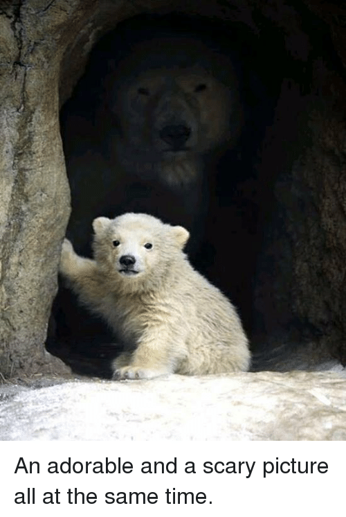 scary pictures: An adorable and a scary picture all at the same time.