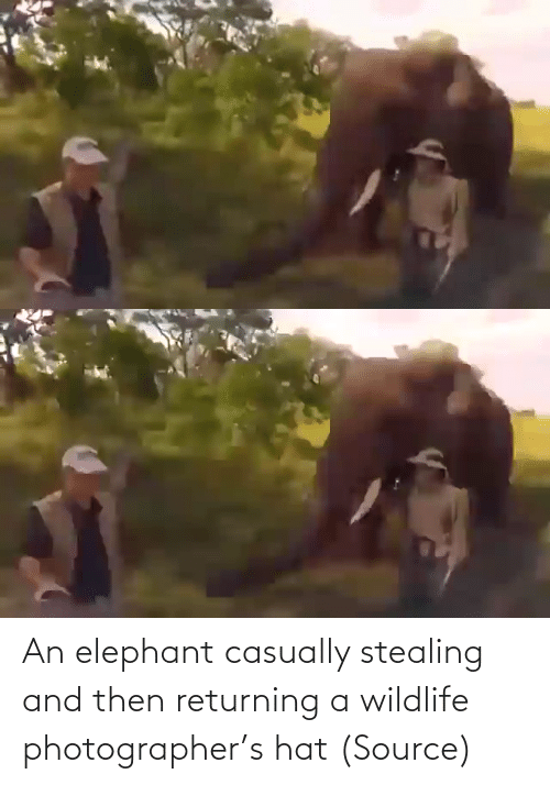 source: An elephant casually stealing and then returning a wildlife photographer's hat (Source)
