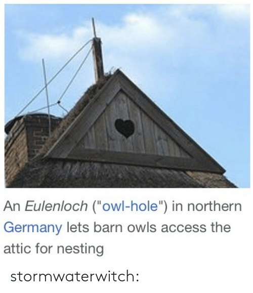 """Target, Tumblr, and Access: An Eulenloch (owl-hole"""") in northern  Germany lets barn owls access the  attic for nesting stormwaterwitch:"""