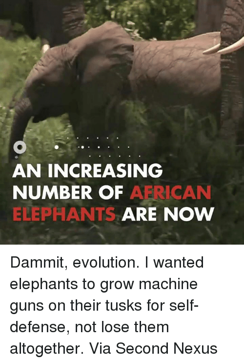 Nexus: AN INCREASING  NUMBER OF  A RICAN  ELEPHANTS  ARE NOW Dammit, evolution. I wanted elephants to grow machine guns on their tusks for self-defense, not lose them altogether.  Via Second Nexus