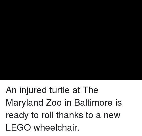 Lego, Memes, and Baltimore: An injured turtle at The Maryland Zoo in Baltimore is ready to roll thanks to a new LEGO wheelchair.