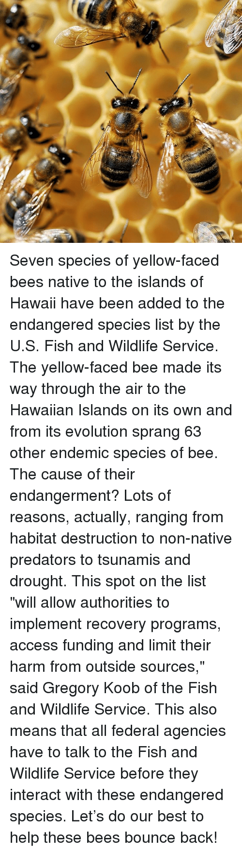 """predation: an intr Seven species of yellow-faced bees native to the islands of Hawaii have been added to the endangered species list by the U.S. Fish and Wildlife Service. The yellow-faced bee made its way through the air to the Hawaiian Islands on its own and from its evolution sprang 63 other endemic species of bee. The cause of their endangerment? Lots of reasons, actually, ranging from habitat destruction to non-native predators to tsunamis and drought. This spot on the list """"will allow authorities to implement recovery programs, access funding and limit their harm from outside sources,"""" said Gregory Koob of the Fish and Wildlife Service. This also means that all federal agencies have to talk to the Fish and Wildlife Service before they interact with these endangered species. Let's do our best to help these bees bounce back!"""