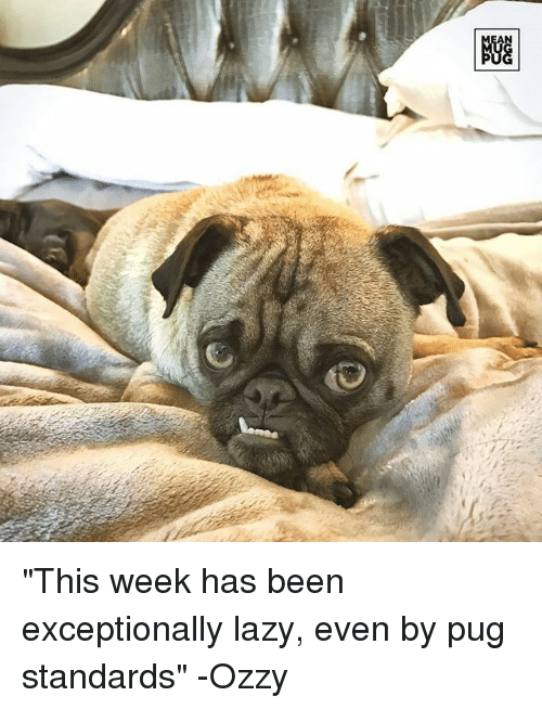 """Lazy, Memes, and Pugs: AN  NGG """"This week has been exceptionally lazy, even by pug standards"""" -Ozzy"""