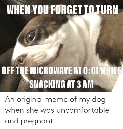 pregnant: An original meme of my dog when she was uncomfortable and pregnant
