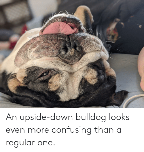 Bulldog, One, and Down: An upside-down bulldog looks even more confusing than a regular one.