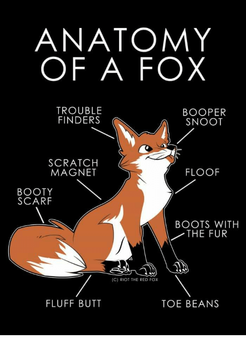 Booty, Butt, and Riot: ANATOMY  OF A FOX  TROUBLE  FINDERS  BOOPER  SNOOT  SCRATCH  MAGNET  FLOOF  BOOTY  SCARF  BOOTS WITH  THE FUR  (C) RIOT THE RED FOx  FLUFF BUTT  TOE BEANS