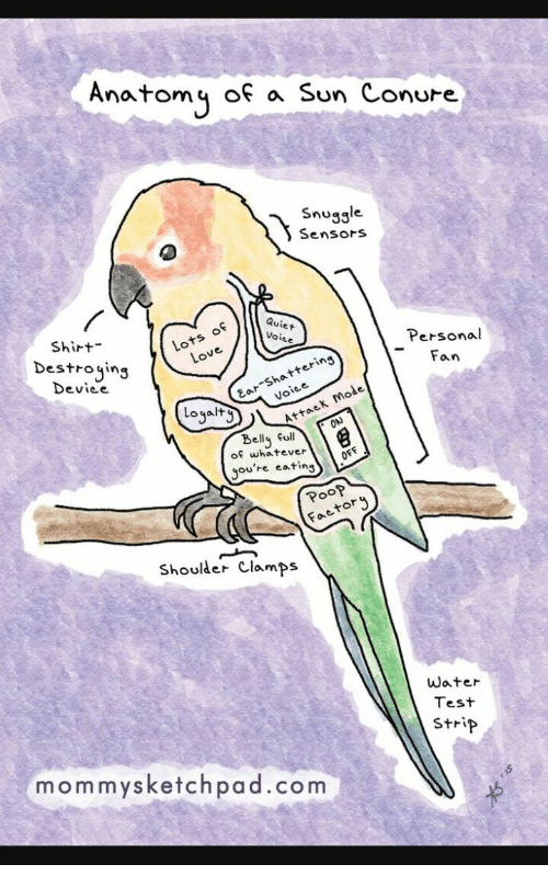 Test, Water, and Personal: Anatomy of a Sun Conure  Snugsle  SensorS  Lots of  Lov  Qui  Shirt  Destrojing  Voi  Personal  -Fan  iee  Ear Shattering  Voiee  Device  Loyalt  Attaek Mode  Belly full  of whatever  you're eating  OFF  Poo?  etory  Shouder Clamps  water  Test  strip  mommysketchpad.com