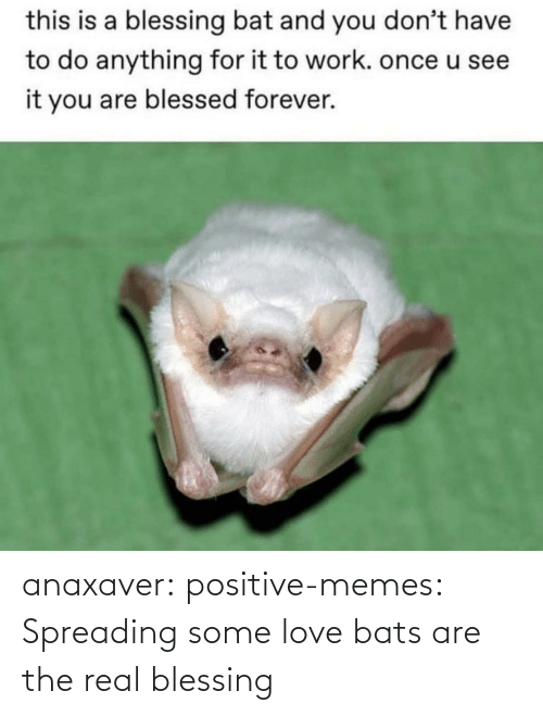 The Real: anaxaver: positive-memes: Spreading some love bats are the real blessing