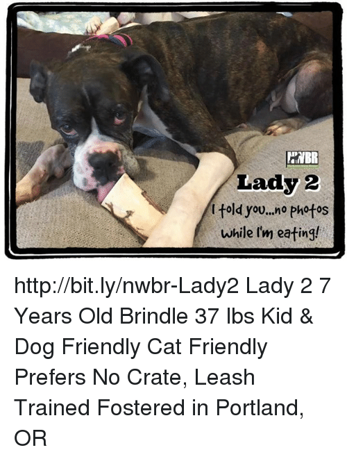 Memes, Http, and Old: aNBR  Lady 2  l told you..no photos  while I'm eating! http://bit.ly/nwbr-Lady2 Lady 2 7 Years Old Brindle 37 lbs Kid & Dog Friendly Cat Friendly Prefers No Crate, Leash Trained Fostered in Portland, OR