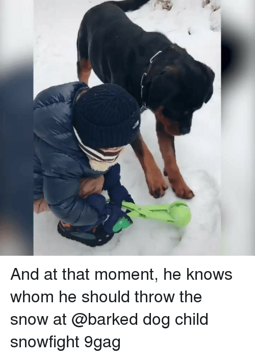 9gag, Memes, and Snow: And at that moment, he knows whom he should throw the snow at⠀ @barked dog child snowfight 9gag