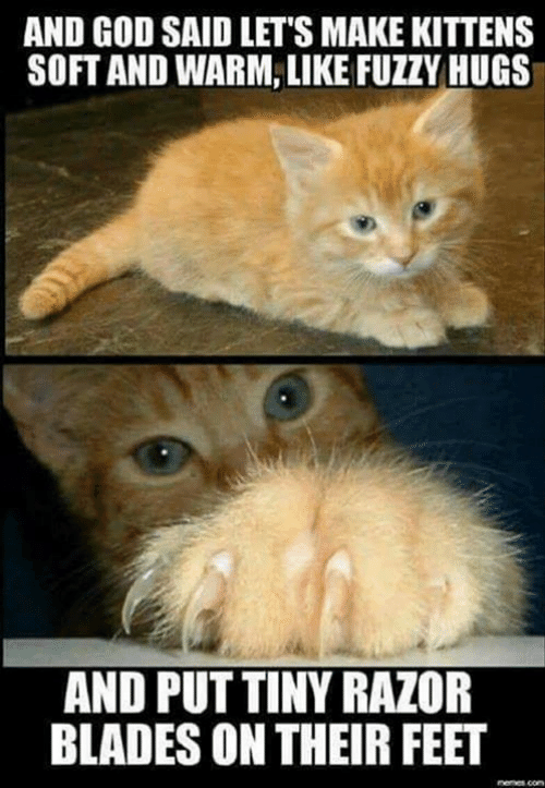 God, Memes, and Kittens: AND GOD SAID LET'S MAKE KITTENS  SOFT AND WARM, LIKE FUZZY HUGS  AND PUT TINY RAZOR  BLADES ON THEIR FEET  nemes com