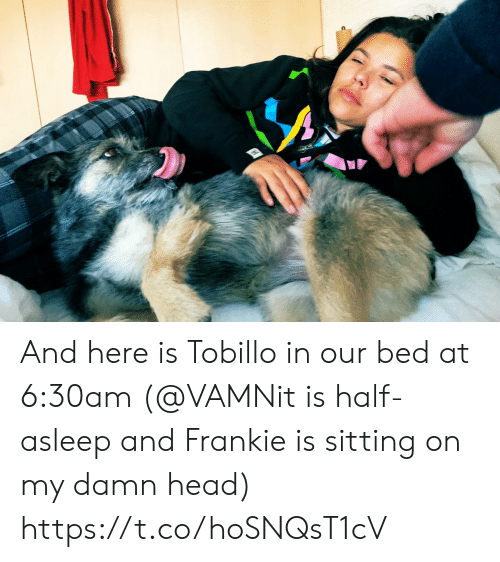 Head, Memes, and 🤖: And here is Tobillo in our bed at 6:30am (@VAMNit is half-asleep and Frankie is sitting on my damn head) https://t.co/hoSNQsT1cV