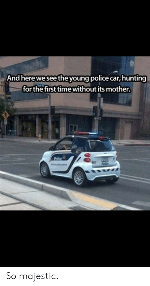 Police, Hunting, and Time: And here we see the young police car, hunting  for the first time without its mother. So majestic.