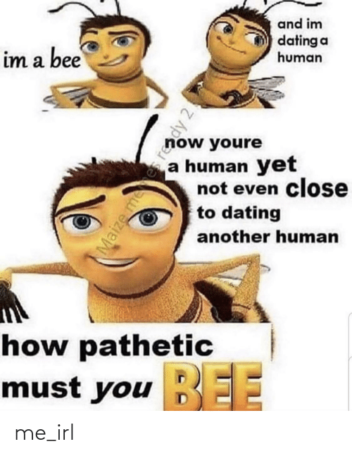 pathetic: and im  dating a  human  im a bee  now youre  a human yet  not even close  to dating  another human  how pathetic  BEE  must you EE  Maize mees reddy 2! me_irl