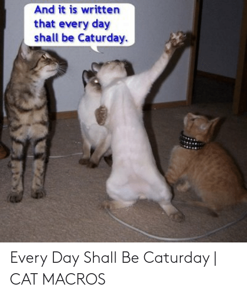 Caturday Cat: And it is writter  that every day  shall be Caturday. Every Day Shall Be Caturday | CAT MACROS