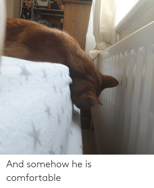 Aww Memes: And somehow he is comfortable