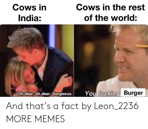leon: And that's a fact by Leon_2236 MORE MEMES