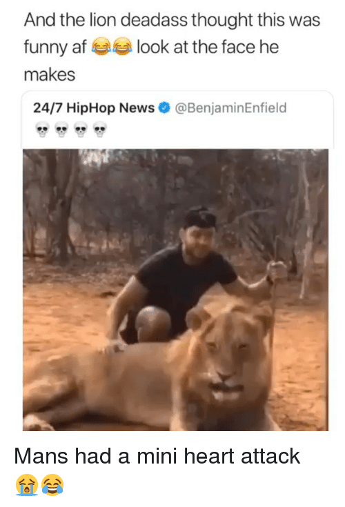 Hiphop: And the lion deadass thought this was  funny af look at the face he  makes  24/7 HipHop News  @BenjaminEnfield Mans had a mini heart attack 😭😂