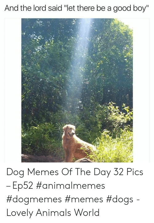 "Animals, Dogs, and Memes: And the lord said ""let there be a good boy"" Dog Memes Of The Day 32 Pics – Ep52 #animalmemes #dogmemes #memes #dogs - Lovely Animals World"
