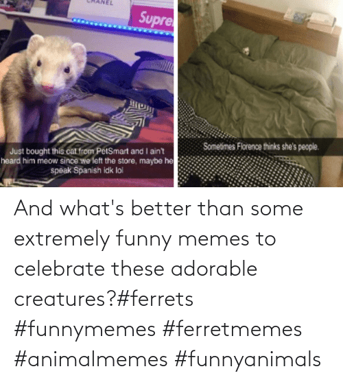 funnymemes: And what's better than some extremely funny memes to celebrate these adorable creatures?#ferrets #funnymemes #ferretmemes #animalmemes #funnyanimals