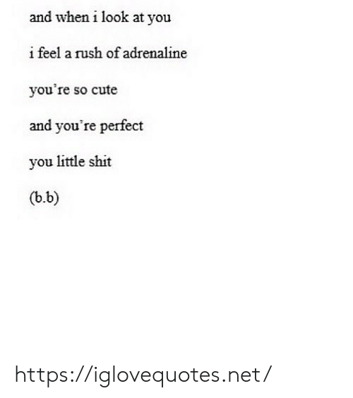 Cute, Shit, and Rush: and when i look at you  i feel a rush of adrenaline  you're so cute  and you're perfect  you little shit  (b.b) https://iglovequotes.net/