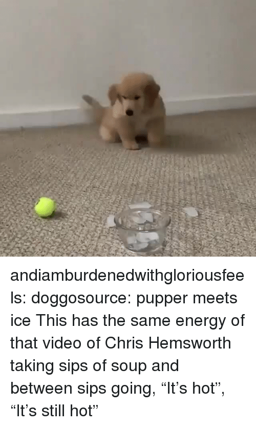 """Chris Hemsworth: andiamburdenedwithgloriousfeels:  doggosource: pupper meets ice This has the same energy of that video of Chris Hemsworth taking sips of soup and between sips going, """"It's hot"""", """"It's still hot"""""""