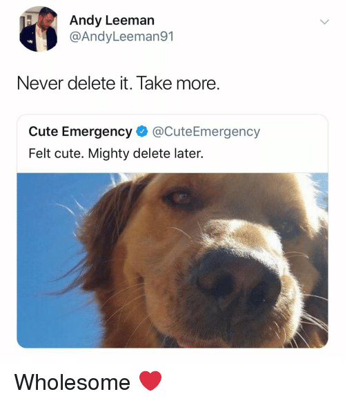 Cute, Dank Memes, and Mighty: Andy Leeman  @AndyLeeman91  Never delete it. Take more  Cute Emergency @CuteEmergency  Felt cute. Mighty delete later. Wholesome ❤️