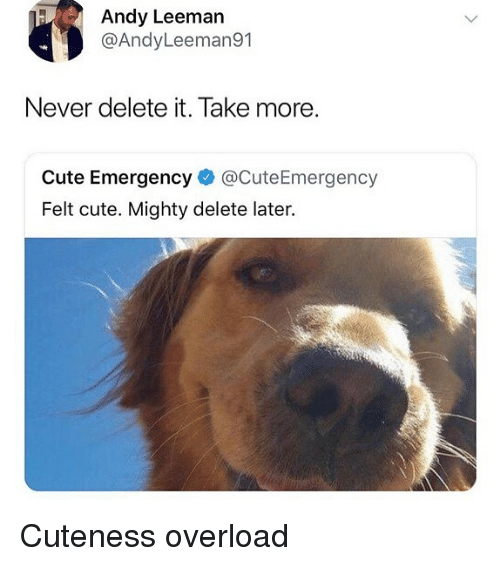 Cute, Memes, and Mighty: Andy Leeman  @AndyLeeman91  Never delete it. Take more.  Cute Emergency @CuteEmergency  Felt cute. Mighty delete later. Cuteness overload