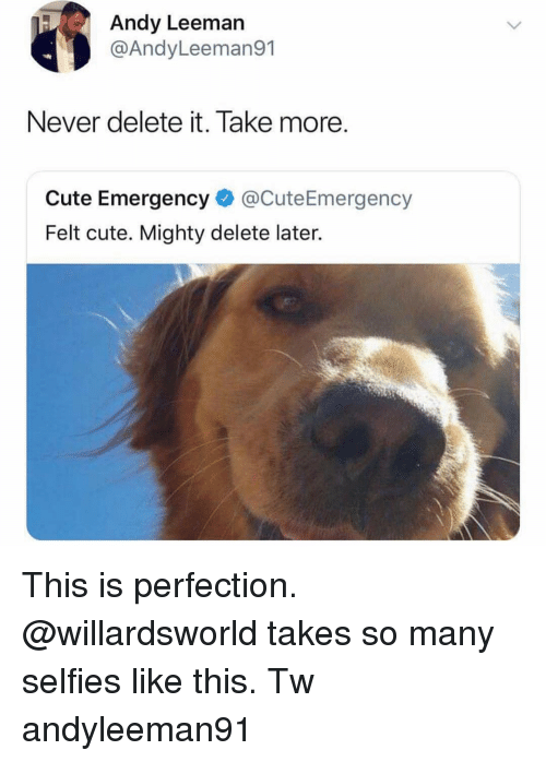 Cute, Memes, and Mighty: Andy Leeman  @AndyLeeman91  Never delete it. Take more  Cute Emergency@CuteEmergency  Felt cute. Mighty delete later. This is perfection. @willardsworld takes so many selfies like this. Tw andyleeman91