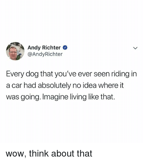 Wow, Relatable, and Living: Andy Richter  @AndyRichter  Every dog that you've ever seen riding in  a car had absolutely no idea where it  was going. Imagine living like that. wow, think about that