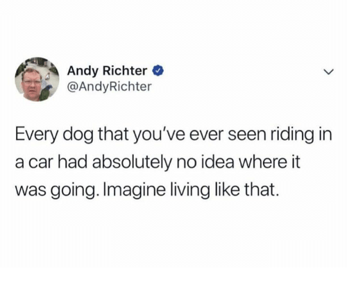 Living, Andy Richter, and Idea: Andy Richter  @AndyRichter  Every dog that you've ever seen riding in  a car had absolutely no idea where it  was going. Imagine living like that