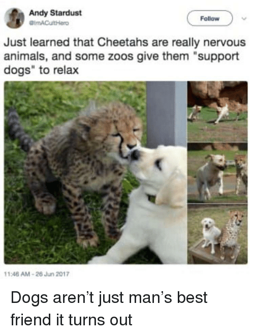"Animals, Best Friend, and Dogs: Andy Stardust  Follow  Just learned that Cheetahs are really nervous  animals, and some zoos give them ""support  dogs"" to relax  146 AM-26 Jun 2017 Dogs aren't just man's best friend it turns out"