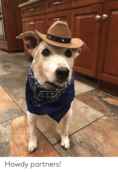Howdy, Ane, and Partners: ANE Howdy partners!