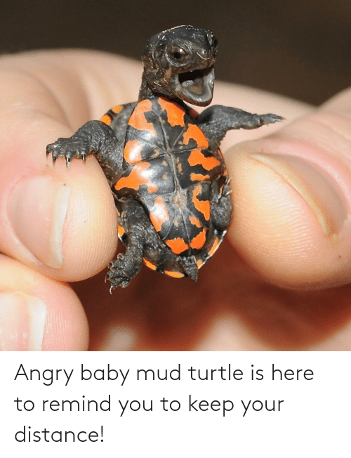 mud: Angry baby mud turtle is here to remind you to keep your distance!
