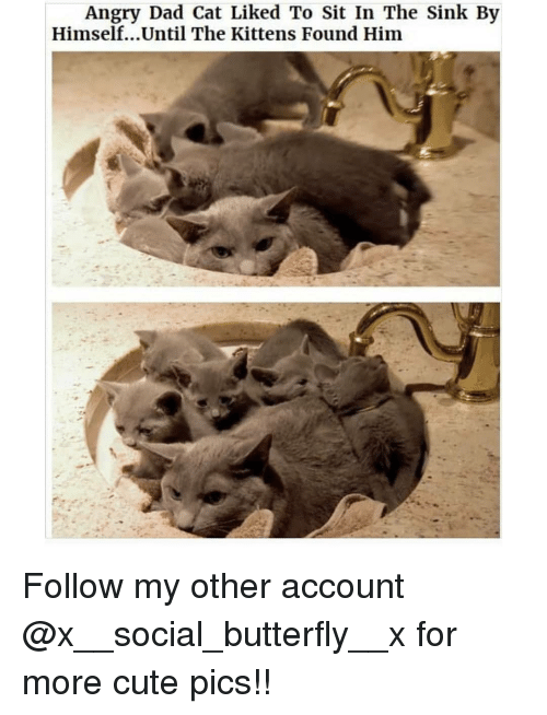 Cute, Dad, and Memes: Angry Dad Cat Liked To Sit In The Sink By  Himself...Until The Kittens Found Him Follow my other account @x__social_butterfly__x for more cute pics!!
