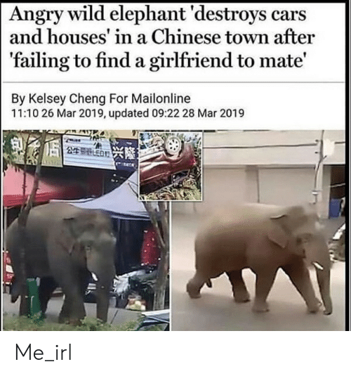 Destroys: Angry wild elephant 'destroys cars  and houses' in a Chinese town after  'failing to find a girlfriend to mate'  By Kelsey Cheng For Mailonline  11:10 26 Mar 2019, updated 09:22 28 Mar 2019  249 ED Me_irl