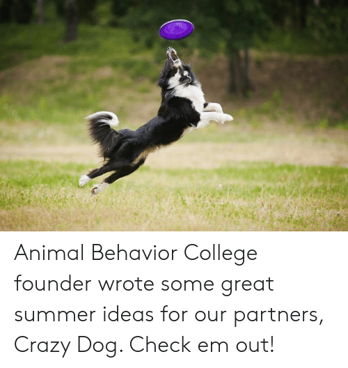 College, Crazy, and Memes: Animal Behavior College founder wrote some great summer ideas for our partners, Crazy Dog. Check em out!