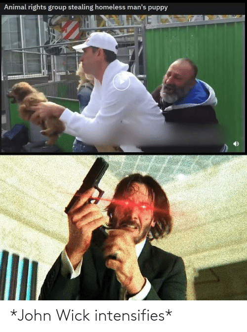 Animal: Animal rights group stealing homeless man's puppy *John Wick intensifies*