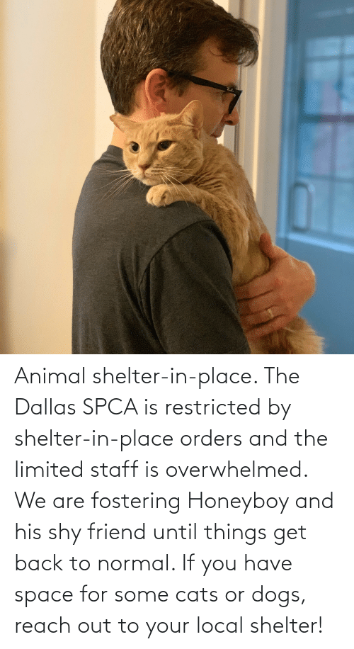 Reach Out: Animal shelter-in-place. The Dallas SPCA is restricted by shelter-in-place orders and the limited staff is overwhelmed. We are fostering Honeyboy and his shy friend until things get back to normal. If you have space for some cats or dogs, reach out to your local shelter!