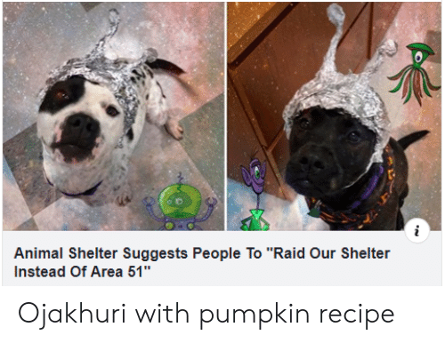 """Animal, Animal Shelter, and Pumpkin: Animal Shelter Suggests People To """"Raid Our Shelter  Instead Of Area 51"""" Ojakhuri with pumpkinrecipe"""