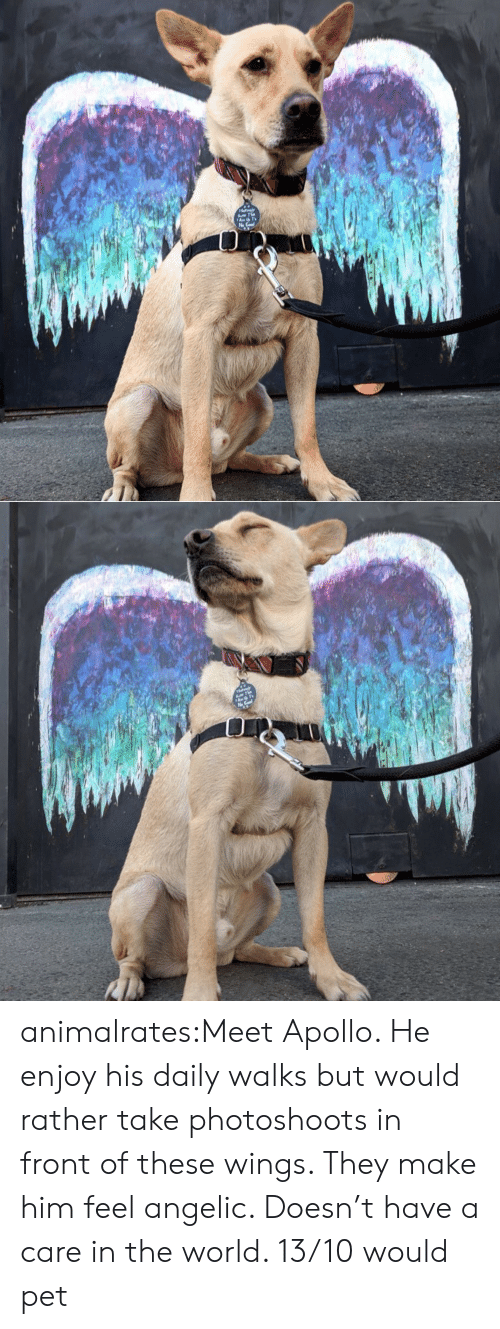 Angelic: animalrates:Meet Apollo. He enjoy his daily walks but would rather take photoshoots in front of these wings. They make him feel angelic. Doesn't have a care in the world. 13/10 would pet