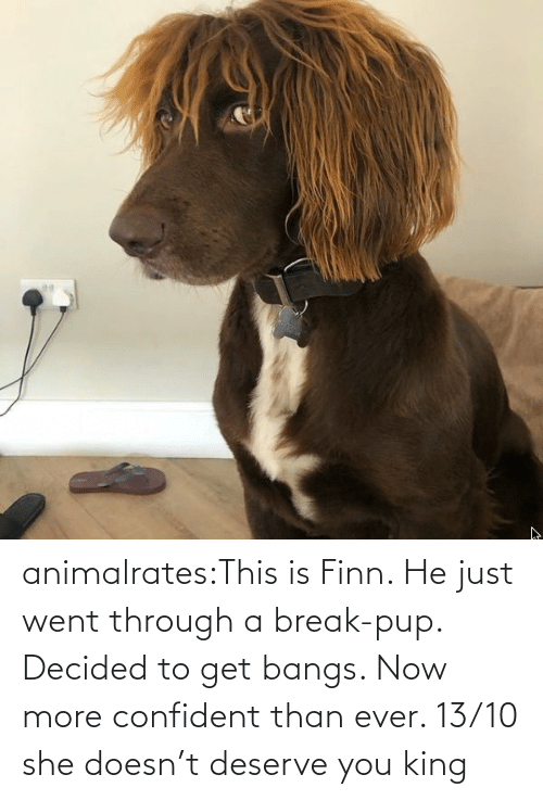 Finn: animalrates:This is Finn. He just went through a break-pup. Decided to get bangs. Now more confident than ever. 13/10 she doesn't deserve you king