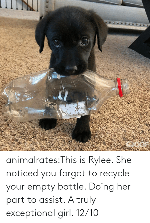 empty bottle: animalrates:This is Rylee. She noticed you forgot to recycle your empty bottle. Doing her part to assist. A truly exceptional girl. 12/10