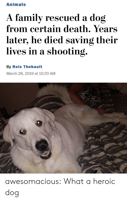 Animals, Tumblr, and Blog: Animals  A familv rescued a dog  from certain death. Years  later, he died saving their  lives in a shooting.  By Reis Thebault  March 26, 2019 at 10:20 AM awesomacious:  What a heroic dog