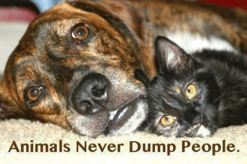 Animals, Memes, and Never: Animals Never Dump People