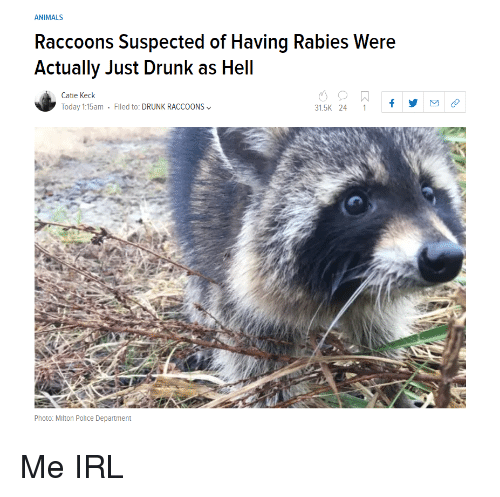 rabies: ANIMALS  Raccoons Suspected of Having Rabies Were  Actually Just Drunk as Hell  Catie Keck  Today 1:15am . Filed to: DRUNK RACCOONS﹀  31.5K 24 1f  Photo: Mlton Police Department Me IRL