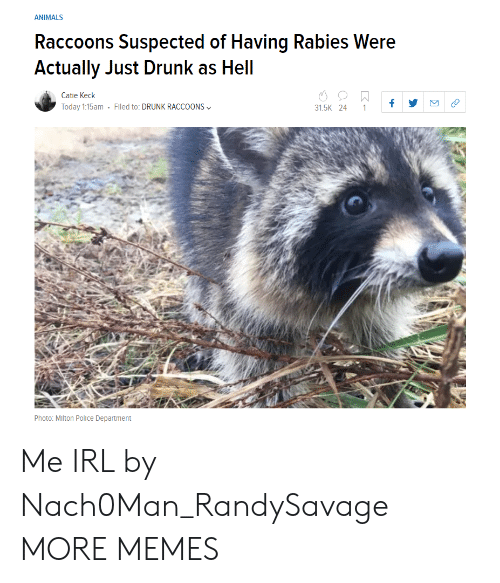 rabies: ANIMALS  Raccoons Suspected of Having Rabies Were  Actually Just Drunk as Hell  Catie Keck  Today 1:15am . Filed to: DRUNK RACCOONS﹀  31.5K 24 1f  Photo: Mlton Police Department Me IRL by Nach0Man_RandySavage MORE MEMES