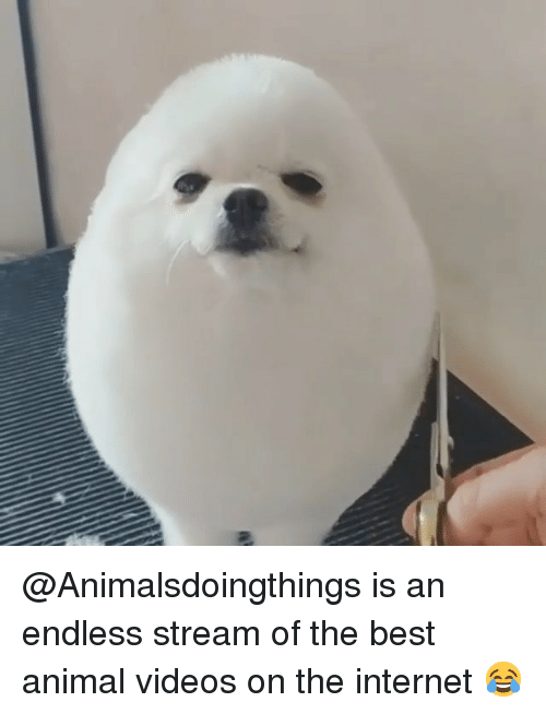 Animal Videos: @Animalsdoingthings is an endless stream of the best animal videos on the internet 😂