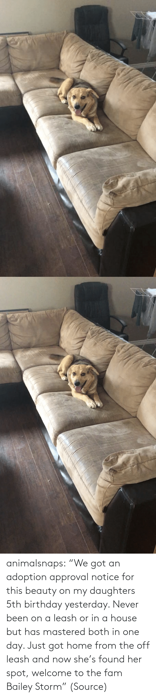 "welcome: animalsnaps:  ""We got an adoption approval notice for this beauty on my daughters 5th birthday yesterday. Never been on a leash or in a house but has mastered both in one day. Just got home from the off leash and now she's found her spot, welcome to the fam Bailey Storm"" (Source)"